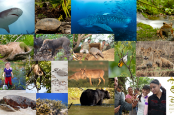 Disney Worldwide Conservation Fund Awards its 1,000th Conservation Grant