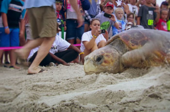Disney Celebrates Eighth Annual Tour de Turtles