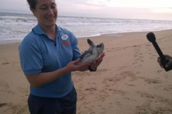 Disney Employees Help Sea Turtles Return to Their Natural Habitat