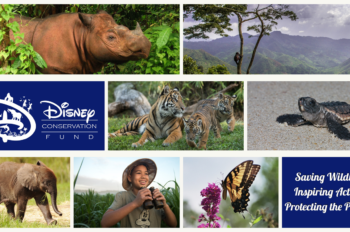 The Disney Conservation Fund Awards $5 Million to Conservation Organizations and Names its 2018 Disney Conservation Heroes