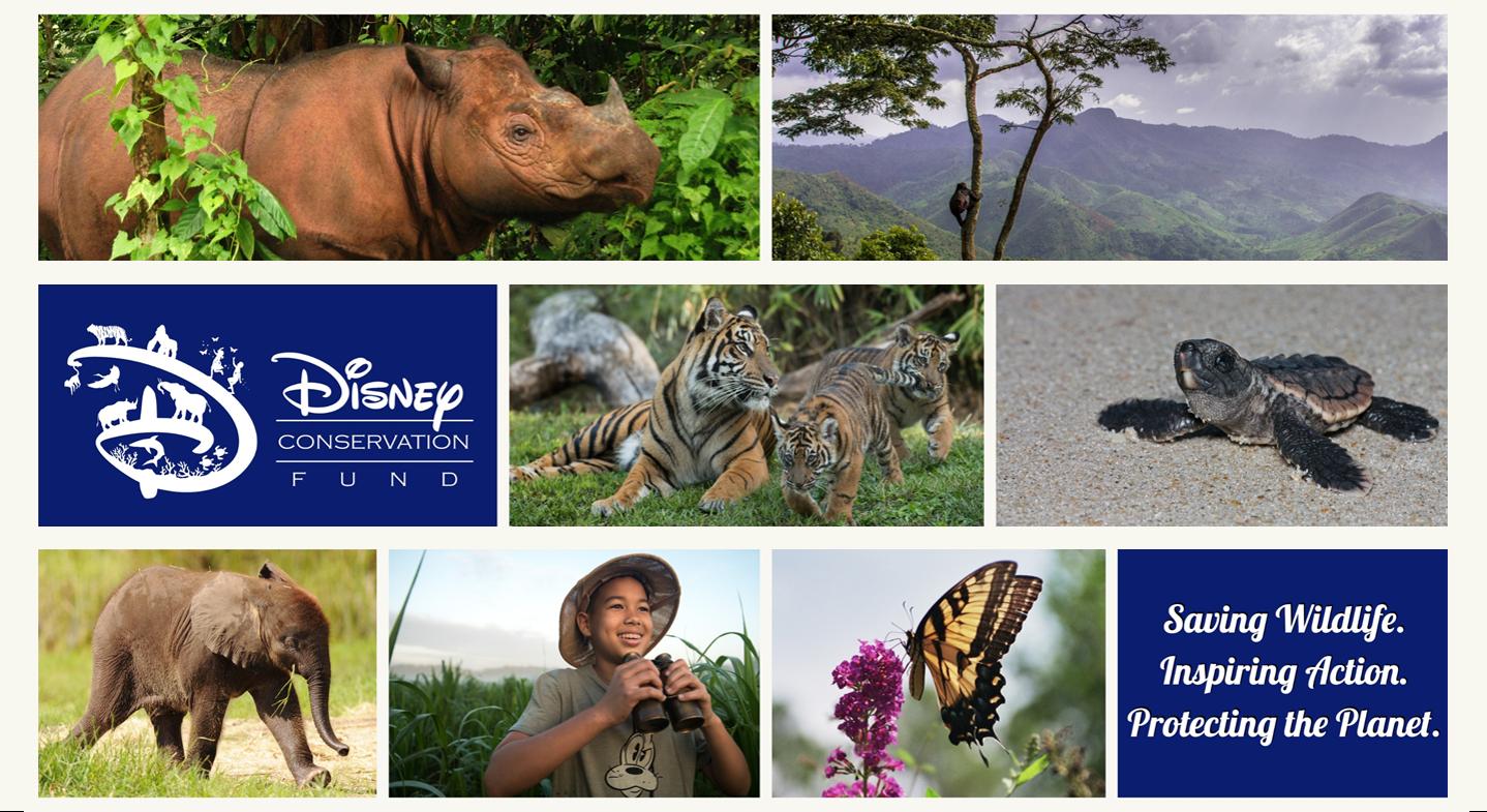 Environment - Enviromental Impact, News, Conservation Fund