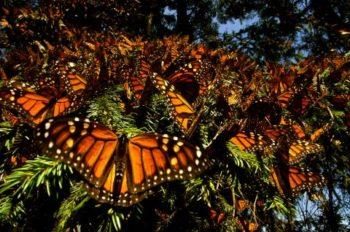 Disneynature's 'Wings of Life' Debuts Today